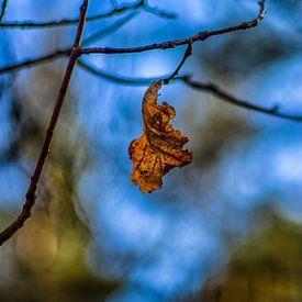 Herfstkleuren.09 (16x10) van Timo Bergenhenegouwen