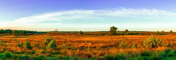 Zomer op de Kampina (panorama). van Stephan Krabbendam
