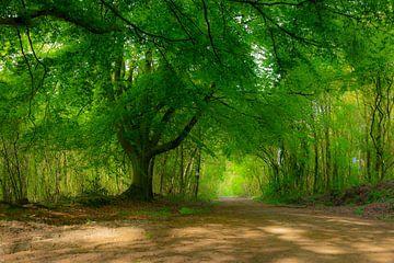 bomen in het bos van Silvia Rikmanspoel