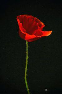 Klaproos schilderij - Rode Klaproos