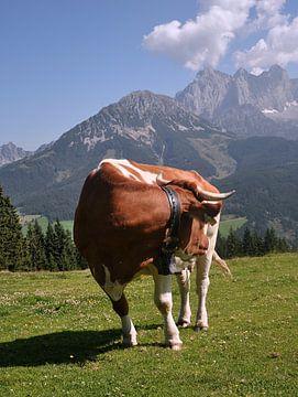 Omkijkende koe met Panorama
