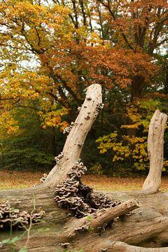 Herfst 3 van Ronald Hulsebos