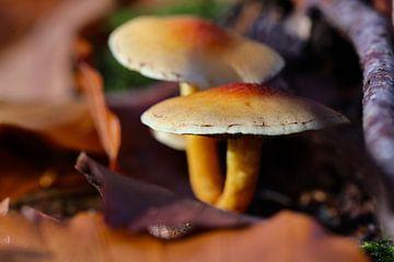 paddenstoelen van Marieke Funke