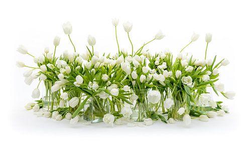 Nature morte des tulipes blanches