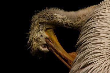 Pelikan van Gabriele Haase