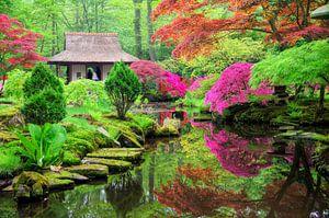 Japanse tuin in bloei