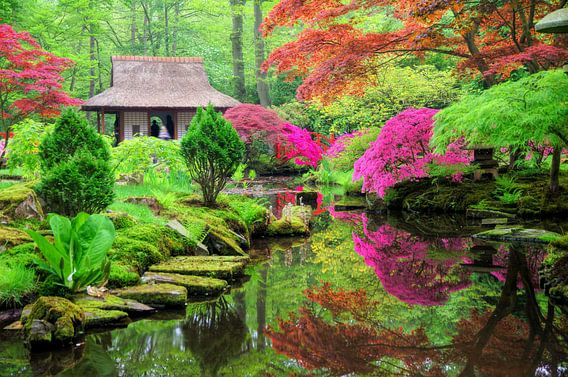 Japanse tuin in bloei van Dennis van de Water