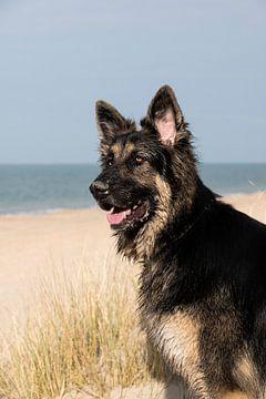 Deutscher Schäferhund am Strand von Annelies Cranendonk