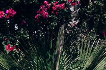 Blühende Palmen von Shelena van de Voorde