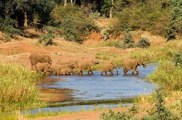 Afrikanischer Elefant von paul van Gaalen