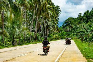 Streetview palmtrees