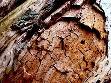 Geheimnisvolle Welt der Bäume (2) van Heidrun Carola Herrmann