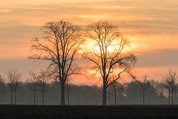 Die Sonne geht gerade auf von Dick Bosman