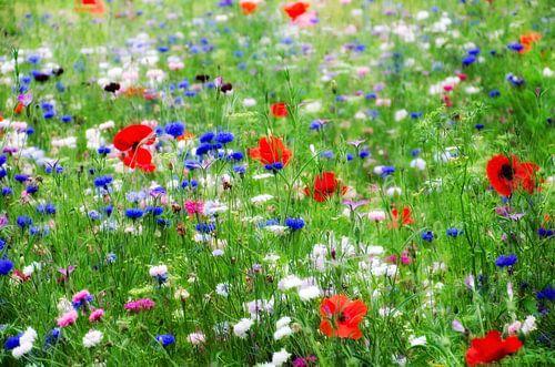 Bloemenveld met klaprozen en korenbloemen van Jessica Berendsen
