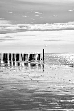 Eb aan de Zeeuwse kust van Alice's Pictures
