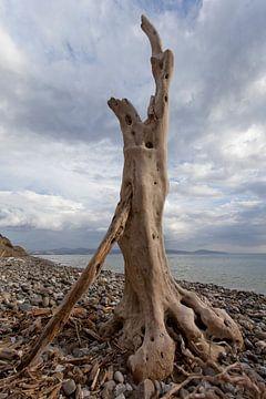 Sculptuur van aangespoeld hout aan de kust op Kreta, Griekenland van Coos Photography
