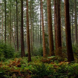 Entre les arbres sur Ton de Koning