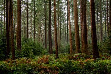Zwischen den Bäumen von Ton de Koning