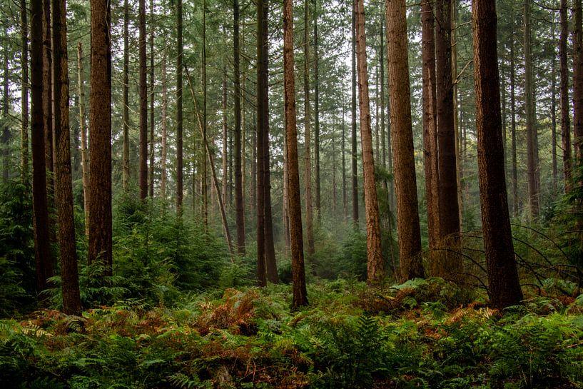 Tussen de bomen van Ton de Koning