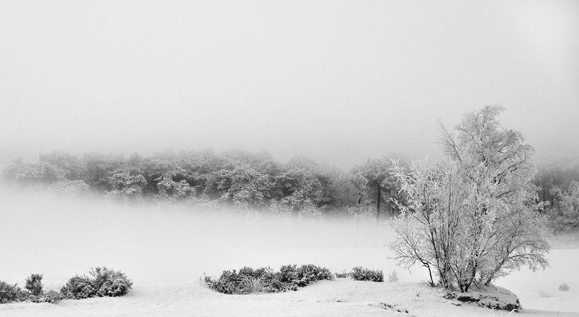 Winter mist van Robin Voorhamm