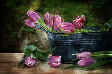 Tulpen Stillleben von Claudia Evans