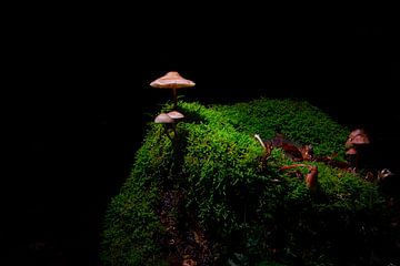 Miniatur-Landschaft von Arthur Mourits