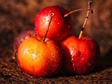 Mini Appels van Rob Boon