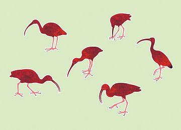 Rode ibissen van Studio Mattie