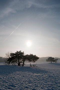 Soester Duinen in Soest, The Netherlands von Tamara Witjes