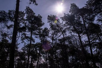 Nationaal Park De Loonse en Drunense Duinen van Anouk IJpelaar