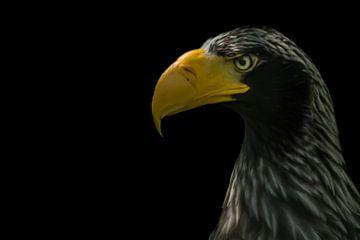Weißkopfseeadler (Stellvertreter) von Hennie Zeij