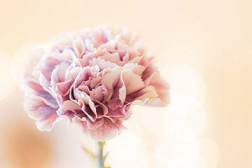 pivoine rose sur Tania Perneel