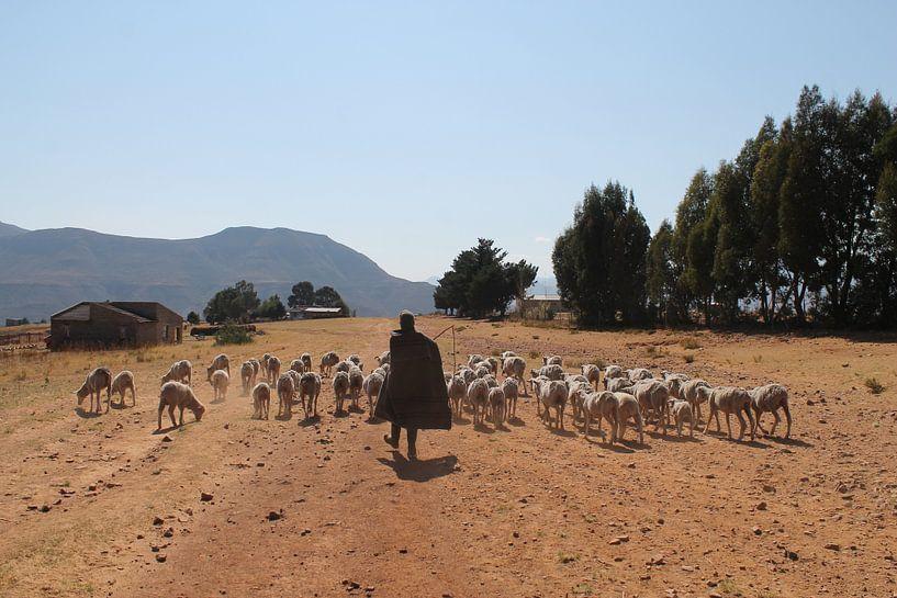 Hirte in Lesotho von Christiaan Van Den Berg