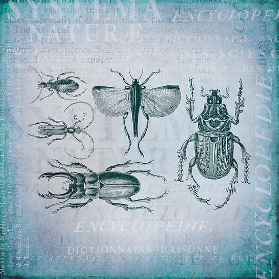 Kevers en insecten