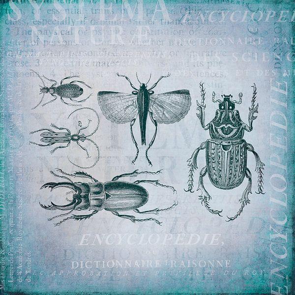 Kevers en insecten van Andrea Haase