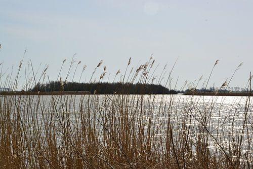 Zicht op natuurgebied Lauwersmeer bij Ezumakeeg