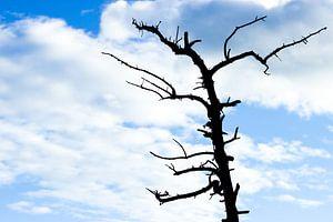 Bladloze boom tegen een heldere blauwe lucht met witte wolken