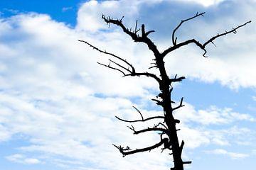Blattloser Baum gegen einen freien blauen Himmel mit weißen Wolken von Devin Meijer