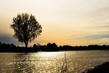 Rivier en boom van Rutger Kuus