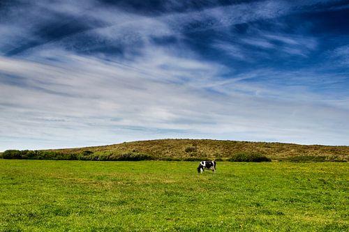 Wijds Terschellings landschap: blauwe hemel, groen gras en 1 koe van