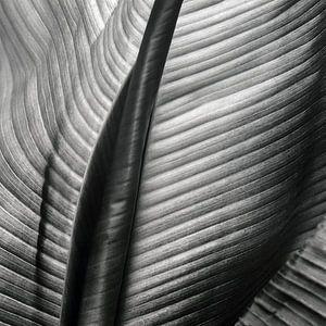 Abstraktes Bananenblatt