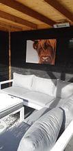 Klantfoto: Portret Schotse Hooglander 2 van Sandra van Kampen, op canvas