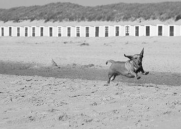 Hond geniet van strand op Texel sur Elfriede de Jonge Boeree