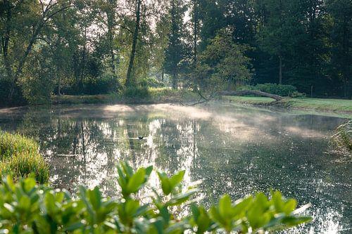 Mistige ochtend bij vijver in park