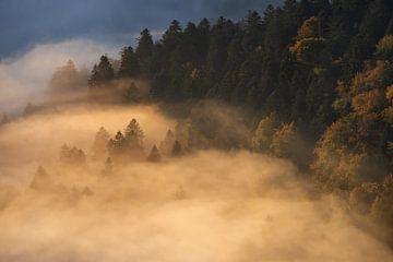 Arbres dans le brouillard sur Wojciech Kruczynski