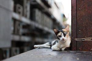 Bangkok straatkat van Dusty Bisschops