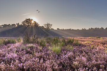Galderse Heide Breda sunrise van