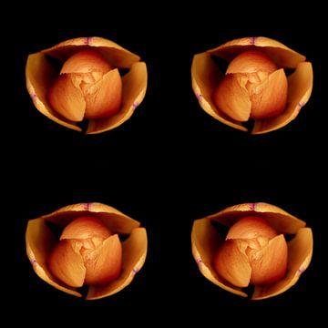 Makro-Draufsicht einer Tulpe von Ribbi The Artist