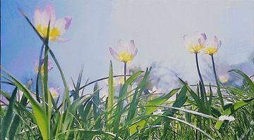 Helle Tulpen unter der Sonne und blauem Himmel über grünen Grashalmen - Gemälde