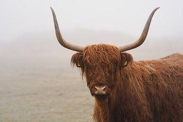 Schotse hooglander in de mist Nederland van Joyce van Galen